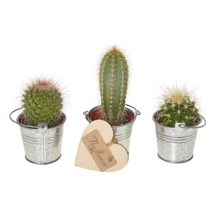 Cactus Selection - Gift Set