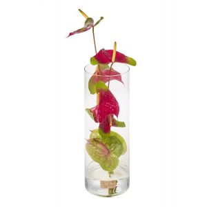 Anthurium Tall Corporate Vase