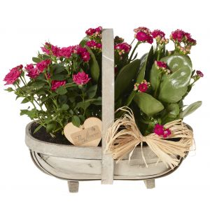 Planted Basket Arrangement - Flowers Gift - Flower Gift Basket - Flower Basket
