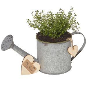 Herb Window Pot